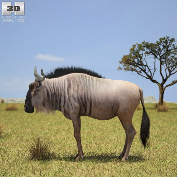 Wildebeest 3d model
