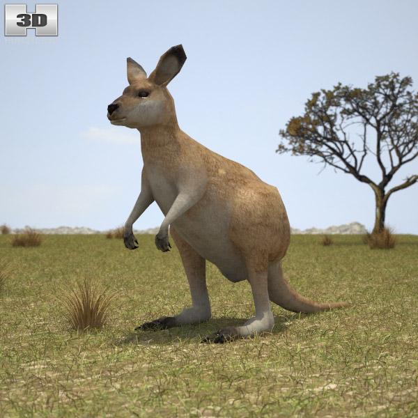 Kangaroo Joey 3d model