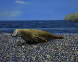 Crabeater Seal 3D model
