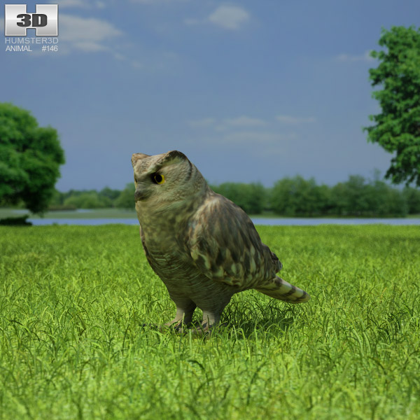 Eurasian Eagle-Owl 3d model