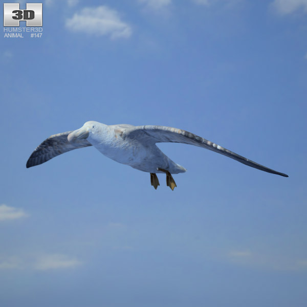 Southern Giant Petrel 3d model