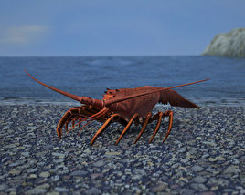 Spiny Lobster 3D model