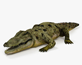 Common Crocodile HD 3D model