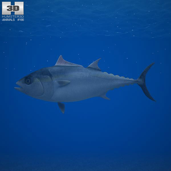 Atlantic Bluefin Tuna 3d model