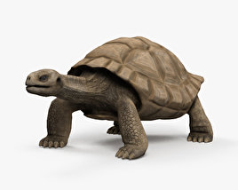 Galapagos Turtle HD 3D model