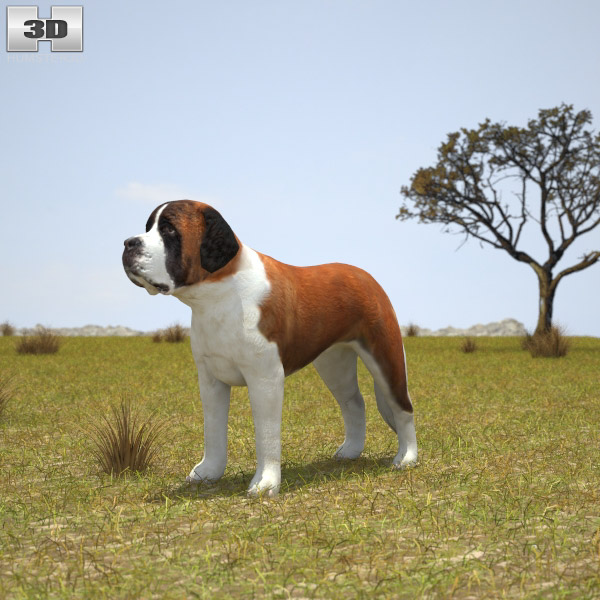 St. Bernard 3d model