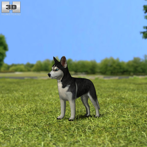 Siberian Husky Puppy 3d model