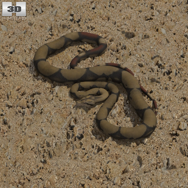 Boa Constrictor 3d model