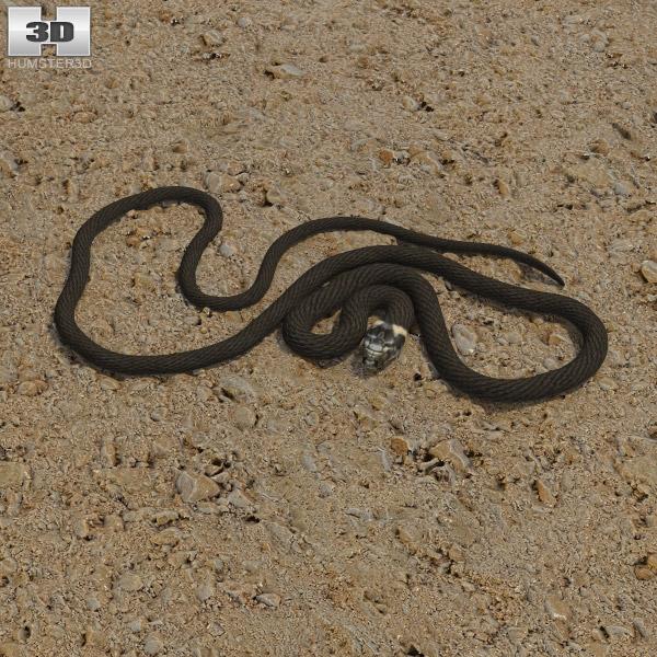 Grass Snake 3d model