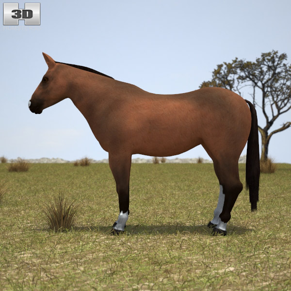 Thoroughbred 3d model