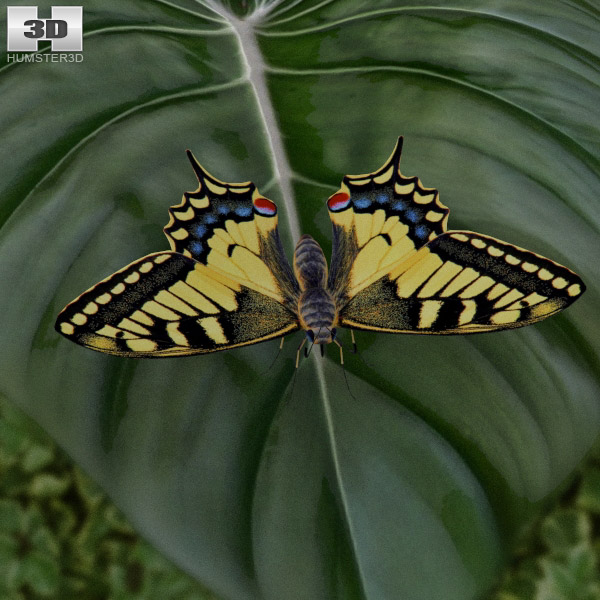 Machaon 3d model