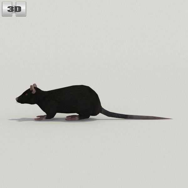 Black Rat 3d model