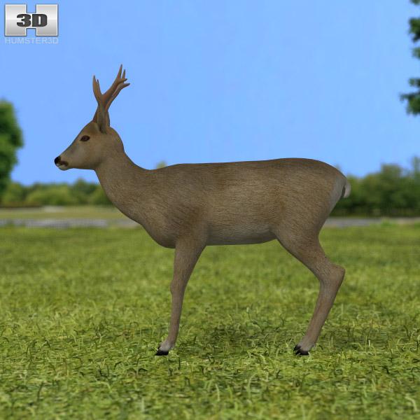Roe Deer 3d model