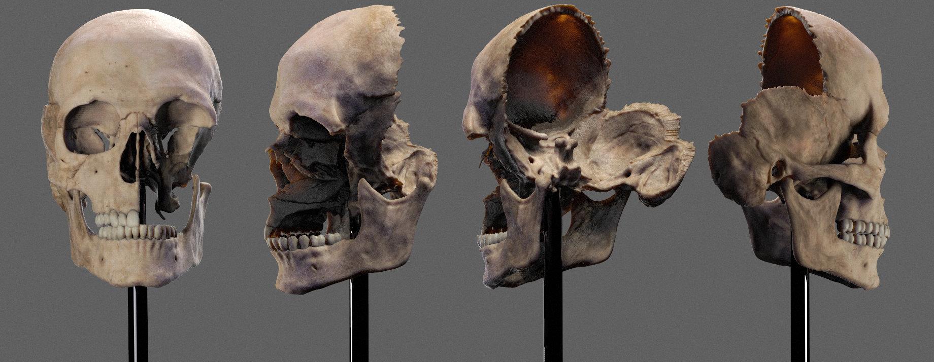 Human skull by Dmitrij Leppée