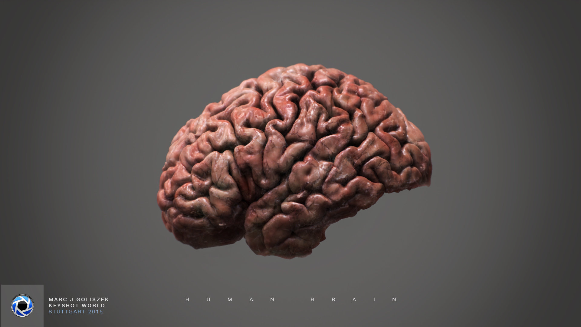 Human Brain by Marc J. Goliszek
