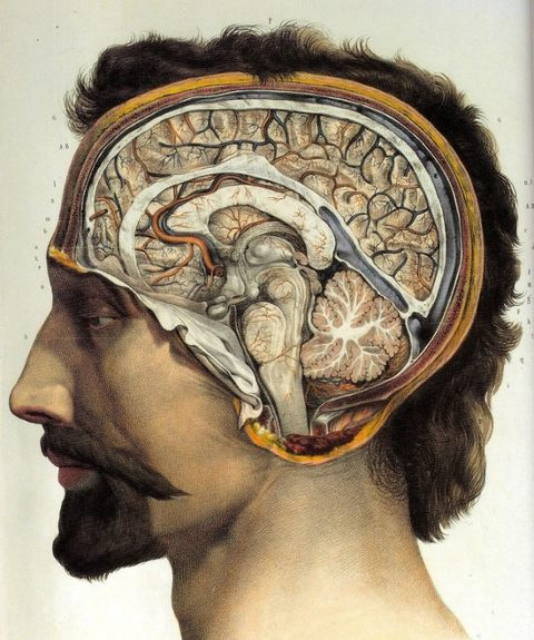 Human brain surgical anatomy poster, 1831