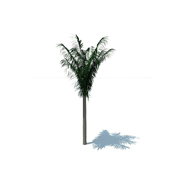 Palm tree Download Free 3D models