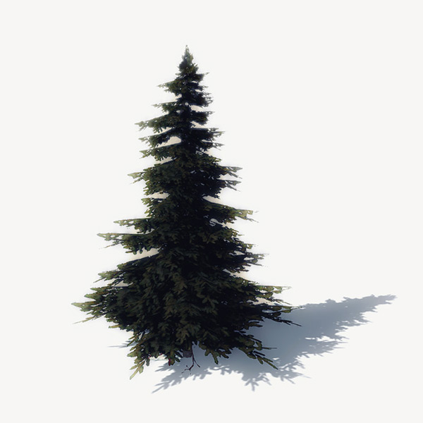 Pine Tree Download Free 3D models