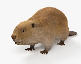 Beaver HD 3D model
