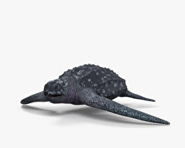 Leatherback Sea Turtle HD 3D model