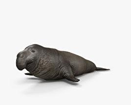 Northern Elephant Seal HD 3D model