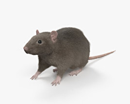 Common Rat HD 3D model
