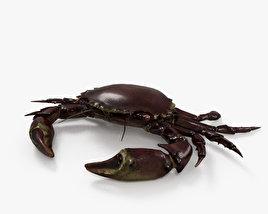 Velvet Crab HD 3D model