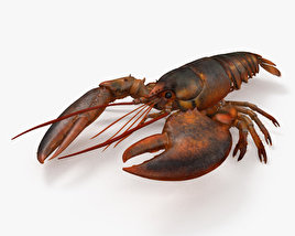 Lobster HD 3D model