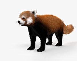 Red Panda HD 3D model