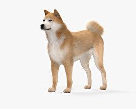 Akita Inu HD 3D model