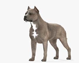 American Pit Bull Terrier HD 3D model