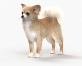 Chihuahua HD 3D model
