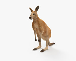 Kangaroo HD 3D model
