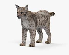 Bobcat HD 3D model