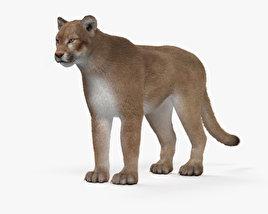 Cougar HD 3D model