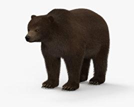 Grizzly Bear HD 3D model