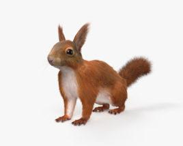 American Red Squirrel HD 3D model