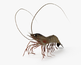 Shrimp HD 3D model