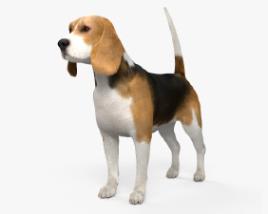 Beagle HD 3D model