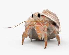 Hermit Crab HD 3D model