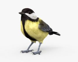Great Tit HD 3D model