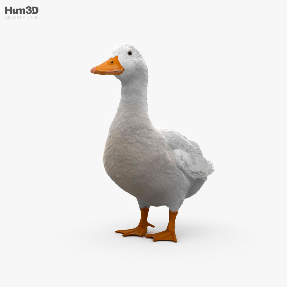 Pekin Duck HD 3d model