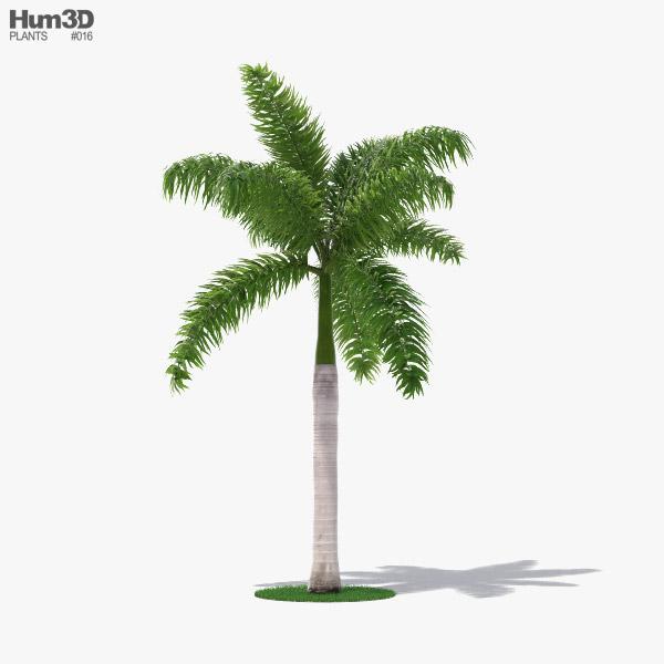 Palm Royal 3D model