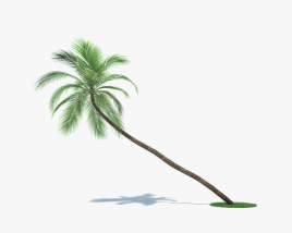 Coconut Palm 002 3D model
