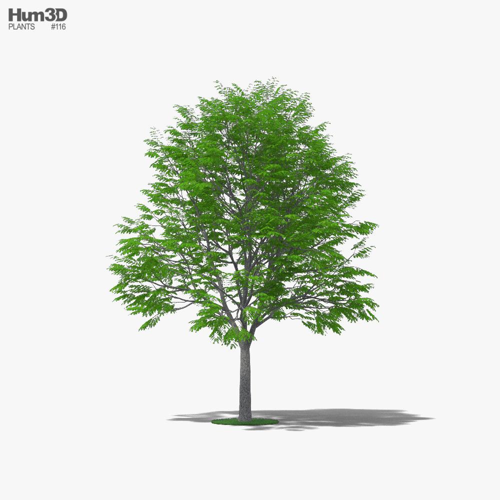 Coffee Tree 3d model