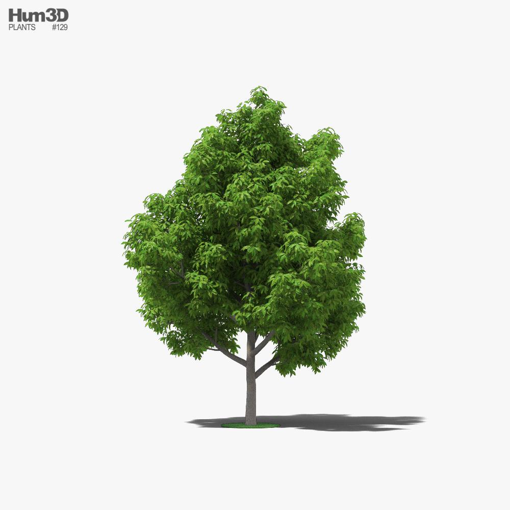 Avocado Tree 3d model
