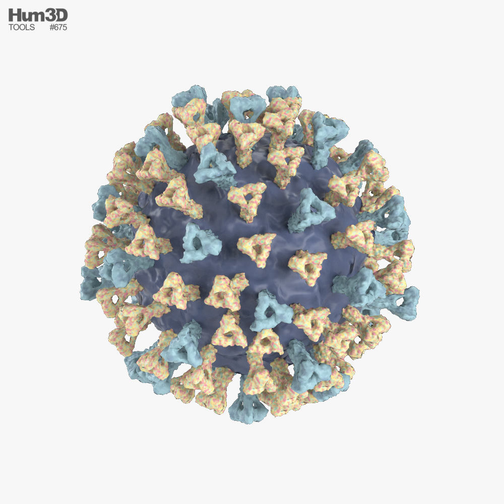 Measles Virus 3d model